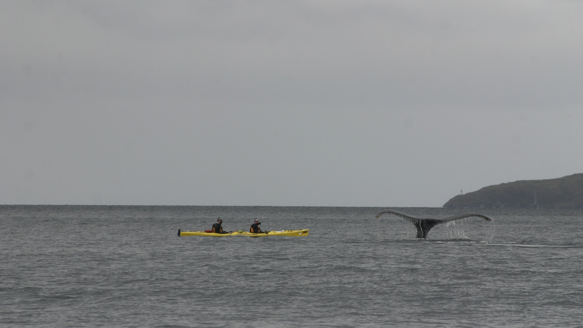 Patagonian Expedition Race, Whale Sighting, Team Kayak Expedition, Patagonia, Chile